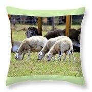 Lambswool Throw Pillow