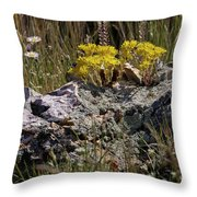 Lanceleaf Stonecrop Sedum 1 Throw Pillow