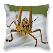 Land Lubber Throw Pillow