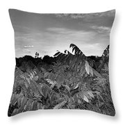 Landscape In Contrast Throw Pillow