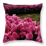 Lane Of Pink Throw Pillow