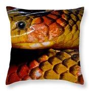 Langsdorfs Coralsnake Throw Pillow
