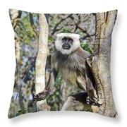 Langur Posing Throw Pillow