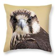Lanner Falcon Throw Pillow