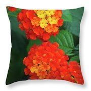 Lantana Bandana Red Flower Throw Pillow
