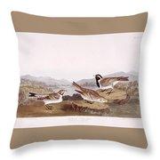 Lapland Long Spur Throw Pillow