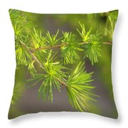 Larch Branch And Foliage Throw Pillow