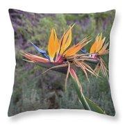 Large Bird Of Paradise Flower In Full Bloom  Throw Pillow