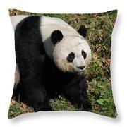 Large Black And White Giant Panda Bear Sitting Throw Pillow