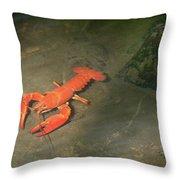 Large Crawdad Throw Pillow