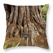 Large Cypress Tree Trunk In Carmel Mission-california  Throw Pillow