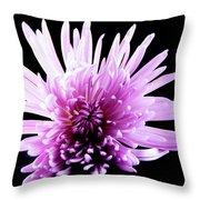 Large Purple Chrysanthemum-1 Throw Pillow