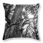 Large Tree Throw Pillow
