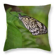 Large White Tree Nymph Butterfly On Green Foliage Throw Pillow