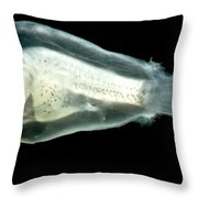 Larval Anglerfish Throw Pillow