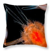 Larval Blind Lobster Throw Pillow