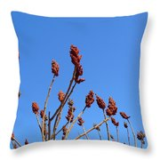 Last Year's Sumac Throw Pillow