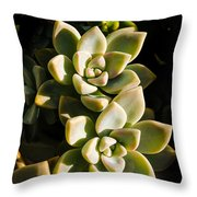 Late Afternoon 2 Throw Pillow