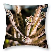 Late Afternoon 3 Throw Pillow