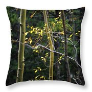 Late Aspen Throw Pillow