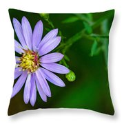 Late Purple Aster Throw Pillow