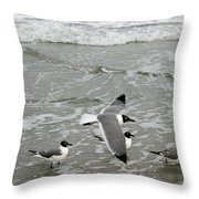 Laughing Gulls Iv- Follow Me Throw Pillow