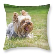 Laughing Yorkshire Terrier Throw Pillow