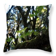 Laurisilva 2 Throw Pillow