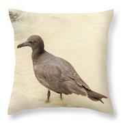 Lava Gull, Leucophaeus Fuliginosus,santa Cruz Island In Galapag Throw Pillow