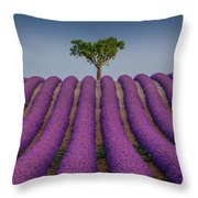 Lavander Field Luberon Throw Pillow