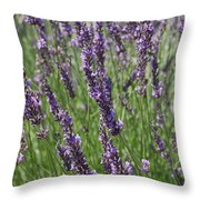 Lavendar Throw Pillow