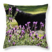 Lavender And Black Lab Throw Pillow