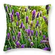 Lavender At Pilgrim Place In Claremont-california Throw Pillow