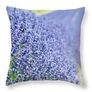 Lavender Blossoms Throw Pillow