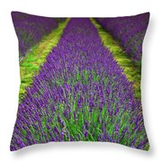 Lavender Dream Throw Pillow