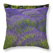 Lavender Field Throw Pillow by Garry Gay