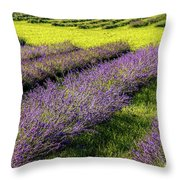 Lavender Fields Forever Throw Pillow by Kendall McKernon