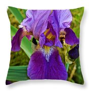 Lavender Iris At Pilgrim Place In Claremont-california  Throw Pillow