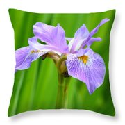 Lavender Iris Throw Pillow