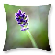 Lavender Moments Throw Pillow