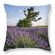 Lavender Provence  Throw Pillow by Juergen Held
