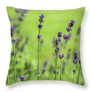 Lavender Spikes  Throw Pillow