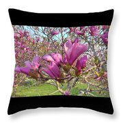 Lavender Tulip Tree Blossums   Spring     Indiana Throw Pillow