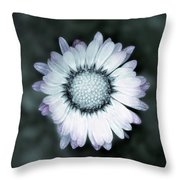 Lawn Daisy - Toned Throw Pillow