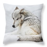Laying Out In A Winter Storm II Throw Pillow