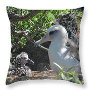 Laysan Albatross Chick Throw Pillow