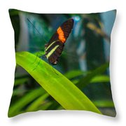 Lazy Butterfly Throw Pillow