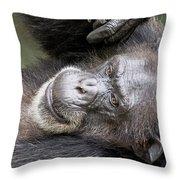 Lazy Chimp - Lowry Park Zoo Throw Pillow