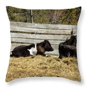 Lazy Cows And Weathered Wood Throw Pillow