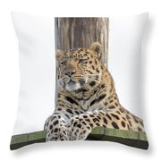 Lazy Leopard Throw Pillow